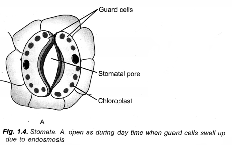 Life Processes Class 10 Important Questions and Answers Science Chapter 6 image - 39