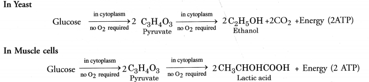 NCERT Exemplar Solutions for Class 10 Science Chapter 6 Life Processes image - 19