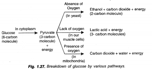 NCERT Exemplar Solutions for Class 10 Science Chapter 6 Life Processes image - 20