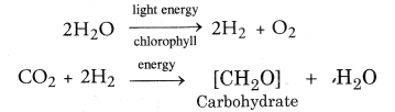 NCERT Exemplar Solutions for Class 10 Science Chapter 6 Life Processes image - 8
