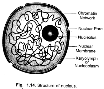 NCERT Exemplar Solutions for Class 9 Science Chapter 5 The Fundamental Unit of Life image -7