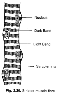 NCERT Exemplar Solutions for Class 9 Science Chapter 6 Tissues image - 10