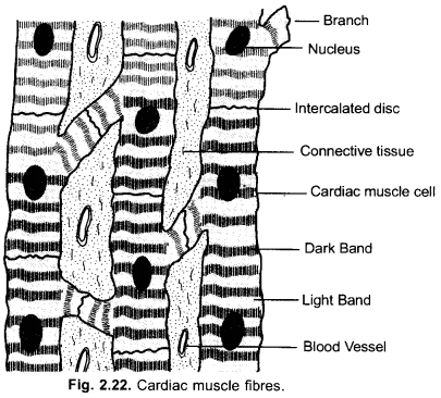 NCERT Exemplar Solutions for Class 9 Science Chapter 6 Tissues image - 12