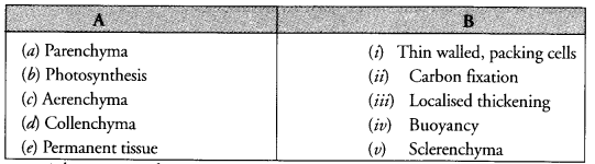 NCERT Exemplar Solutions for Class 9 Science Chapter 6 Tissues image - 2