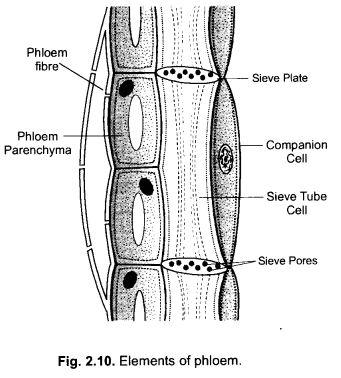 NCERT Exemplar Solutions for Class 9 Science Chapter 6 Tissues image - 4