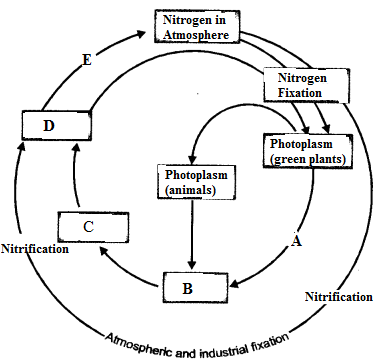 Natural Resources Class 9 Important Questions Science Chapter 14 image - 16