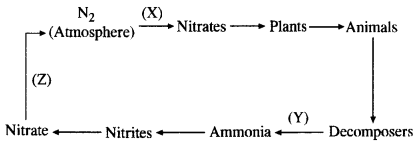 Natural Resources Class 9 Important Questions Science Chapter 14 image - 18