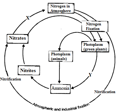 Natural Resources Class 9 Important Questions Science Chapter 14 image - 22