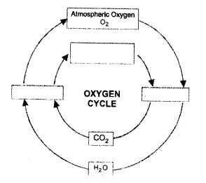 Natural Resources Class 9 Important Questions Science Chapter 14 image - 24