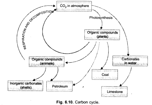 Natural Resources Class 9 Important Questions Science Chapter 14 image - 27