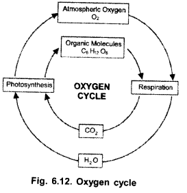 Natural Resources Class 9 Important Questions Science Chapter 14 image - 8