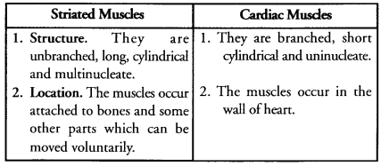 Tissues Class 9 Important Questions Science Chapter 6 image - 10