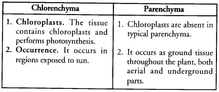 Tissues Class 9 Important Questions Science Chapter 6 image - 13