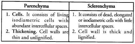 Tissues Class 9 Important Questions Science Chapter 6 image - 14