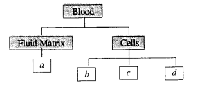 Tissues Class 9 Important Questions Science Chapter 6 image - 16