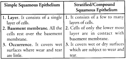 Tissues Class 9 Important Questions Science Chapter 6 image - 18