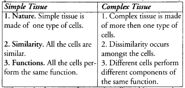 Tissues Class 9 Important Questions Science Chapter 6 image - 21