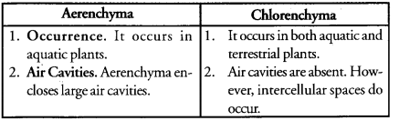 Tissues Class 9 Important Questions Science Chapter 6 image - 4