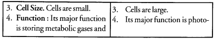 Tissues Class 9 Important Questions Science Chapter 6 image - 5