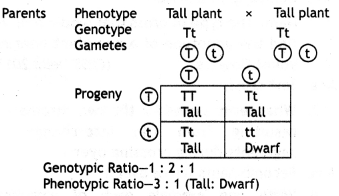 Class 12 Biology Important Questions Chapter 5 Principles of Inheritance and Variation 1