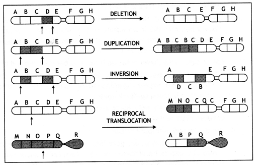 Class 12 Biology Important Questions Chapter 5 Principles of Inheritance and Variation 32