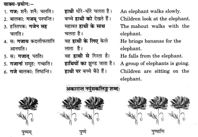 Class 6 Sanskrit Grammar Book Solutions संज्ञा शब्द-रूपाणि तथा वाक्यप्रयोगः 5