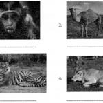 CBSE Class 6 Sanskrit Sample Paper Set 2 Q2