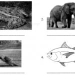 CBSE Class 6 Sanskrit Sample Paper Set 3 Q2