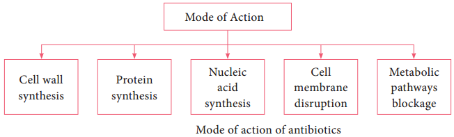 Evaluation of Antimicrobial Chemical Agents Antibiotics img 3