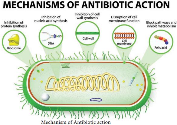 Evaluation of Antimicrobial Chemical Agents Antibiotics img 4