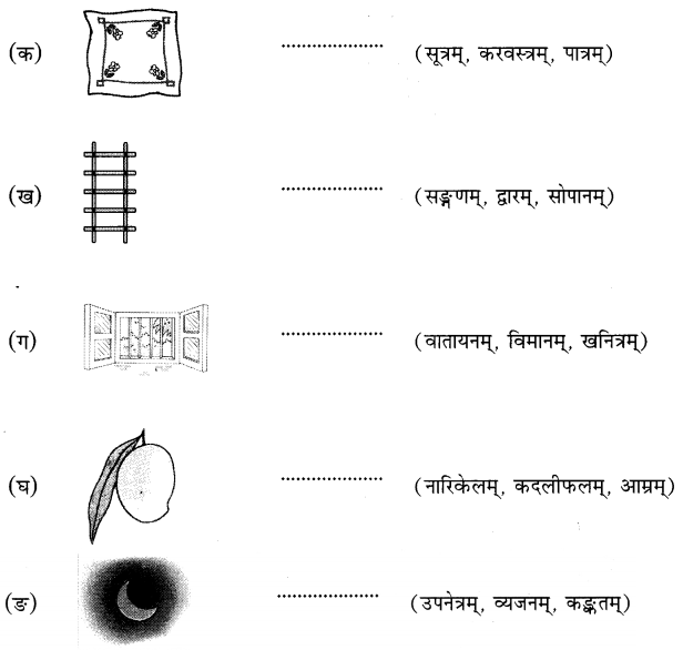 MCQ Questions for Class 6 Sanskrit Chapter 3 शब्द परिचयः 3 with Answers 8