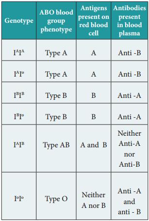 Human Blood Groups img 1