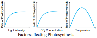 Factors Affecting Photosynthesis img 2