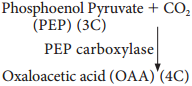 Hatch & Slack Pathway or C Cycle or Dicarboxylic Acid Pathway or Dicarboxylation Pathway img 2