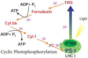 Photophosphorylation img 1