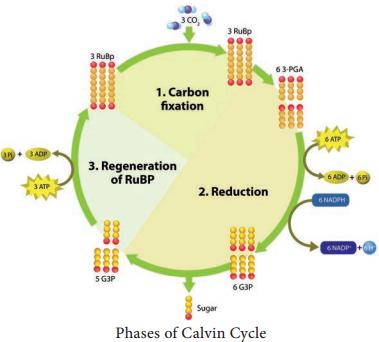 Photophosphorylation img 2