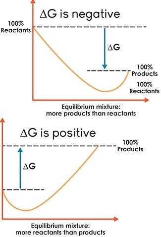 Equilibrium image 1